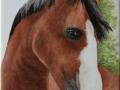 Bildplatte - 20 x 25 - Pferdeportrait
