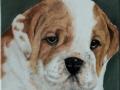 Bildplatte - 20cm - engl.Bulldogge