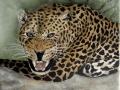 Bildplatte - 25cm - Jaguar